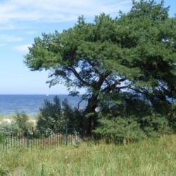 Das deutsche Gruppenhaus Greifswalder Bucht am Meer mit Badestelle.