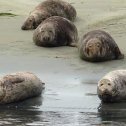 Seehundsafari am niederländischen Gruppenhotel KOM! für Kinder und Jugendfreizeiten.