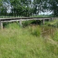 Die Umgebung am niederländischen Freizeitheim Kievitsnest.